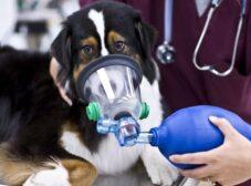 شایعترین بیماریهای تنفسی در سگ ها + علائم و نحوه پیشگیری