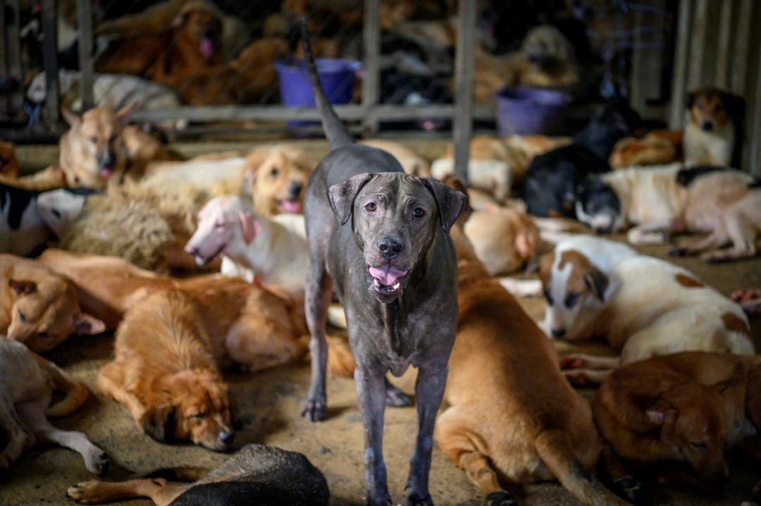 احتمال انتقال بیماری تنفس سگ در پناهگاهها