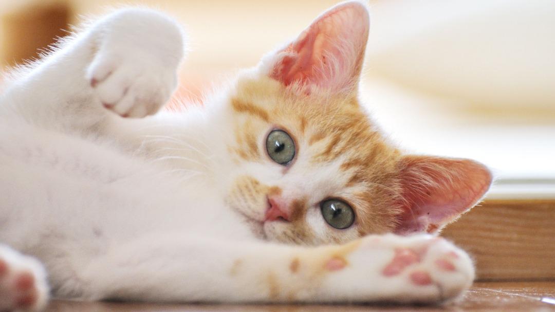بیماری ویروسی پنلوکوپنی گربه ها چیه و چه علائمی داره؟