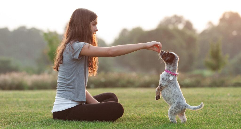 عکس آموزش شستن به توله سگ