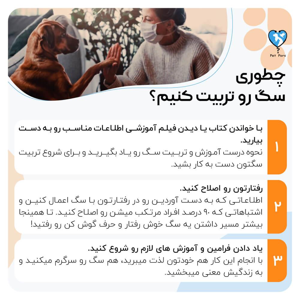 اینفوگرافی نکات آموزش سگ