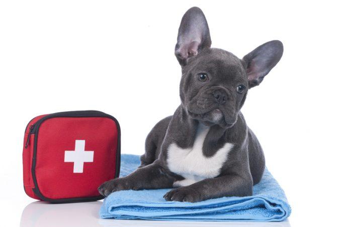 گواهی سلامت سگ جزء قوانین خروج حیوانات خانگی از کشور