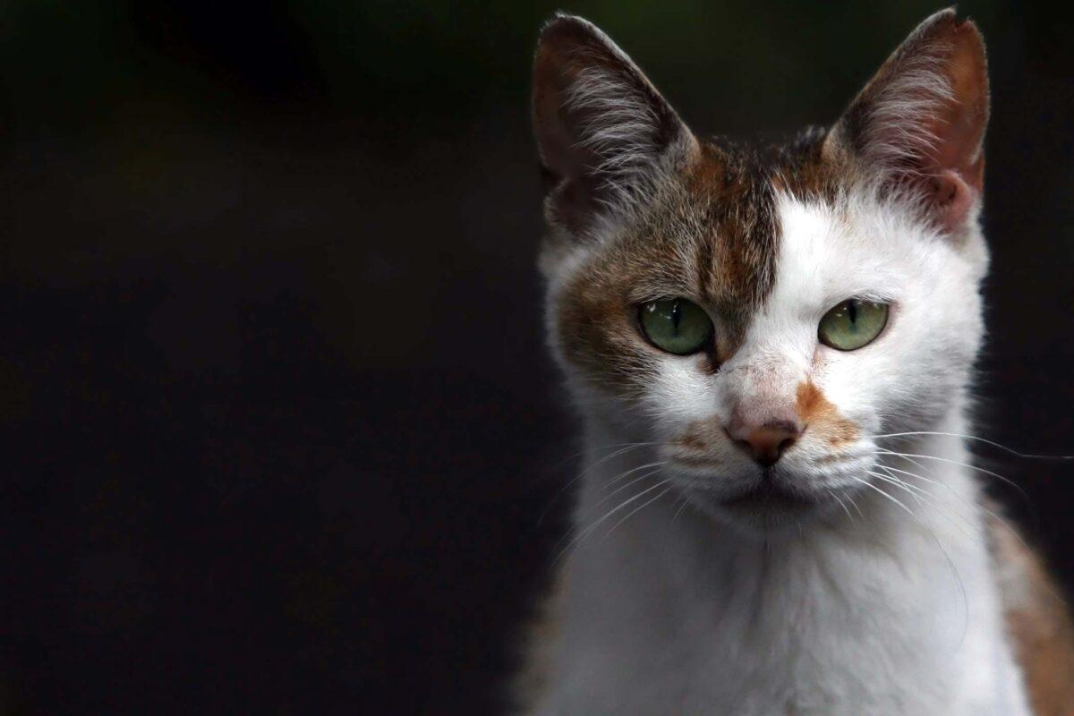 همه چیز دربارۀ قارچ پوستی در گربه ها؛ انواع قارچ گربه، علائم، تشخیص و روش درمان آن
