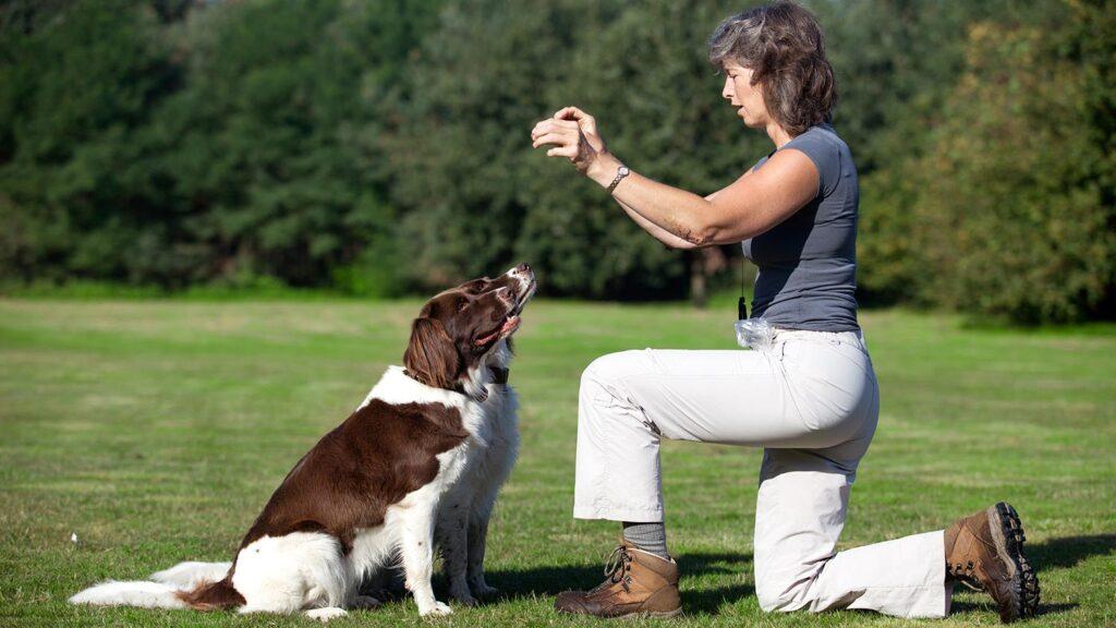 آموزش نشستن به سگ