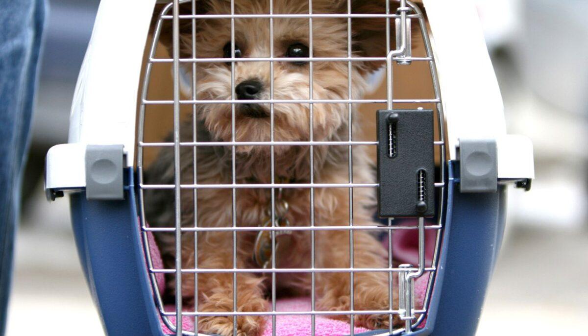 سگ در باکس ویژه پرواز