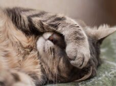 دلایل و علائم بیماری های گوارشی در گربه ها