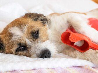 علائم، پیشگیری و درمان مشکلات و بیماریهای گوارشی در سگها