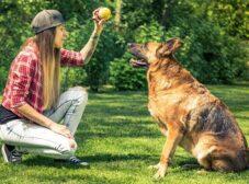 3 روش کاربردی برای آموزش نشستن به سگ