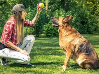 ۳ روش کاربردی برای آموزش نشستن به سگ