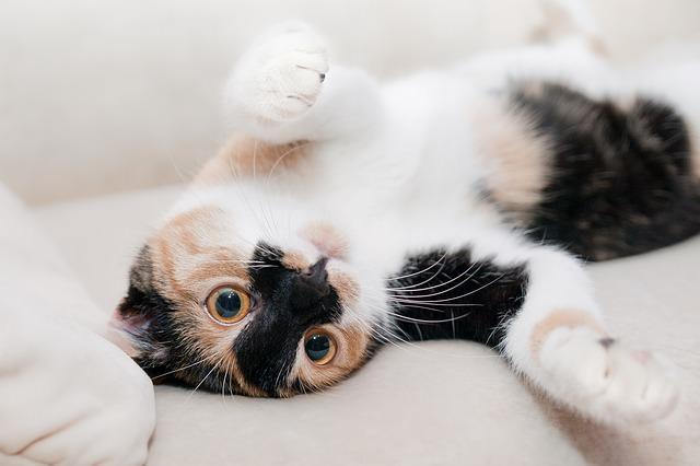 بیماری عفونی گربه