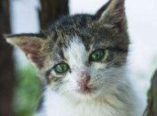 بیماریهای عفونی در گربهها؛ راههای انتقال،پیشگیری و درمان عفونت در گربه