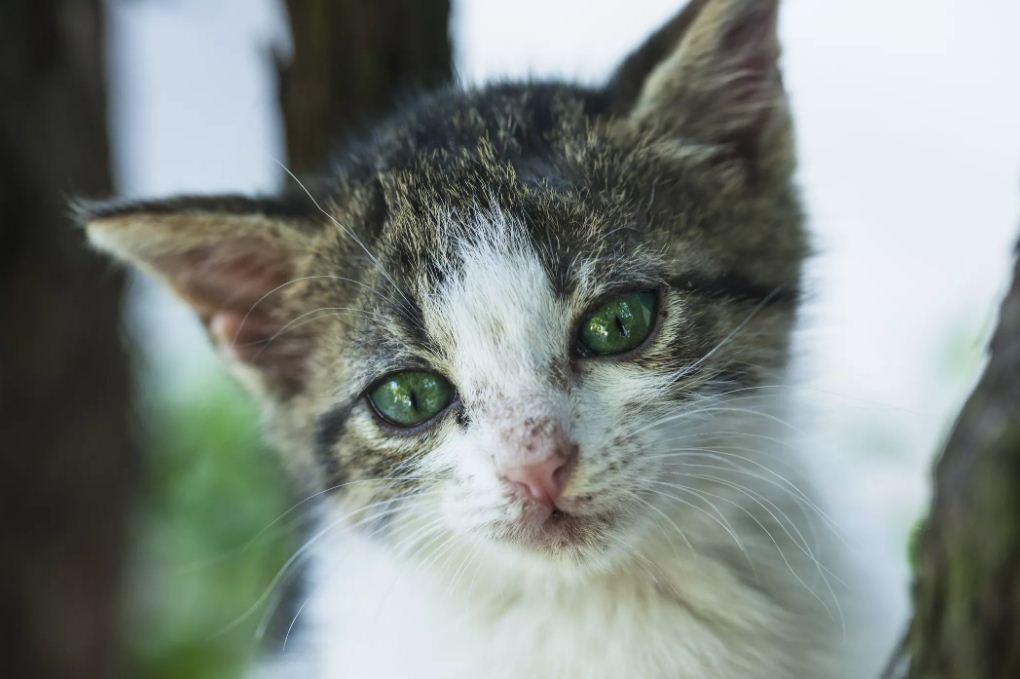 بیماری های عفونی گربه