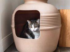 همه چیز در مورد مدفوع گربه؛ تفاوت ظاهر، رنگ و بوی مدفوع سالم با مدفوع غیرطبیعی!