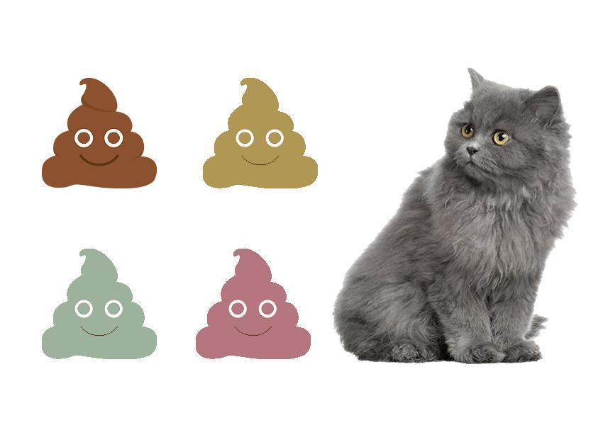 انواع رنگ مدفوع گربه