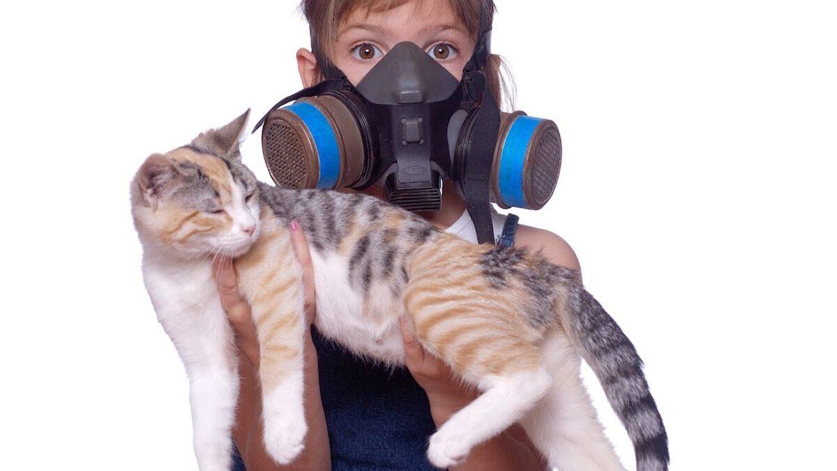 دلیل بوی مدفوع گربه