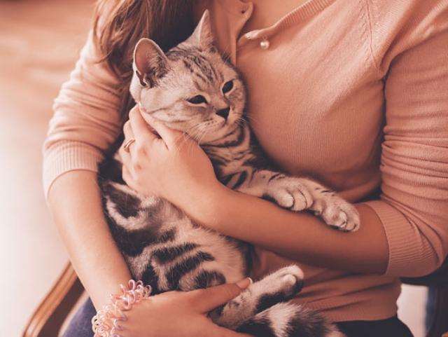 مشکلات کلیوی در گربه ها
