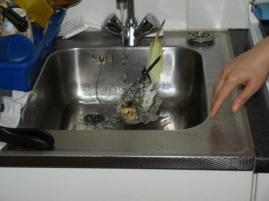 شستن عروس هلندی در سینک