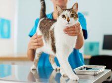 نشانهها و علائم بیماری در گربهها؛ چطوری تشخیص بدیم که گربهمون بیماره؟