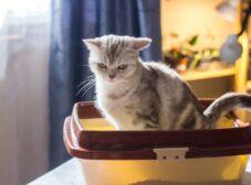 علائم یبوست در گربه ها؛ نحوه تشخیص، راههای پیشگیری و درمان آن
