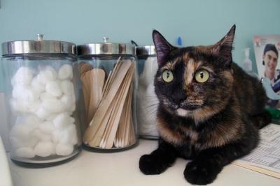 درمان یبوست گربه