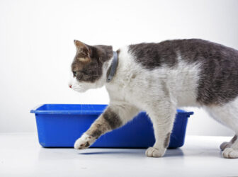 بیماری عفونت ادراری گربه (UTI) و نحوه پیشگیری و درمانش!