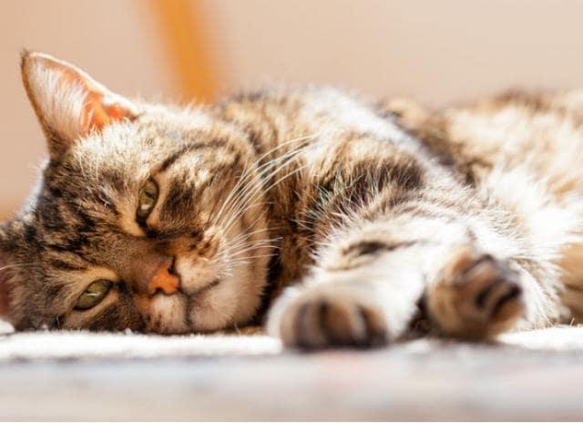 برای نگهداری از گربه شناخت علائم بیماری گربه لازمه