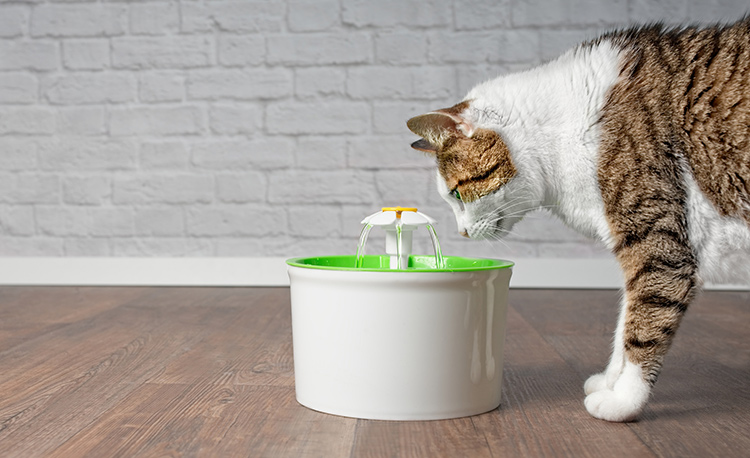 نشویدن آب یکی از راه های پیشگیری از عفونت ادراری گربه