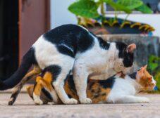راهنمای کامل تولید مثل گربه؛ مراحل، روش و راههای جلوگیری