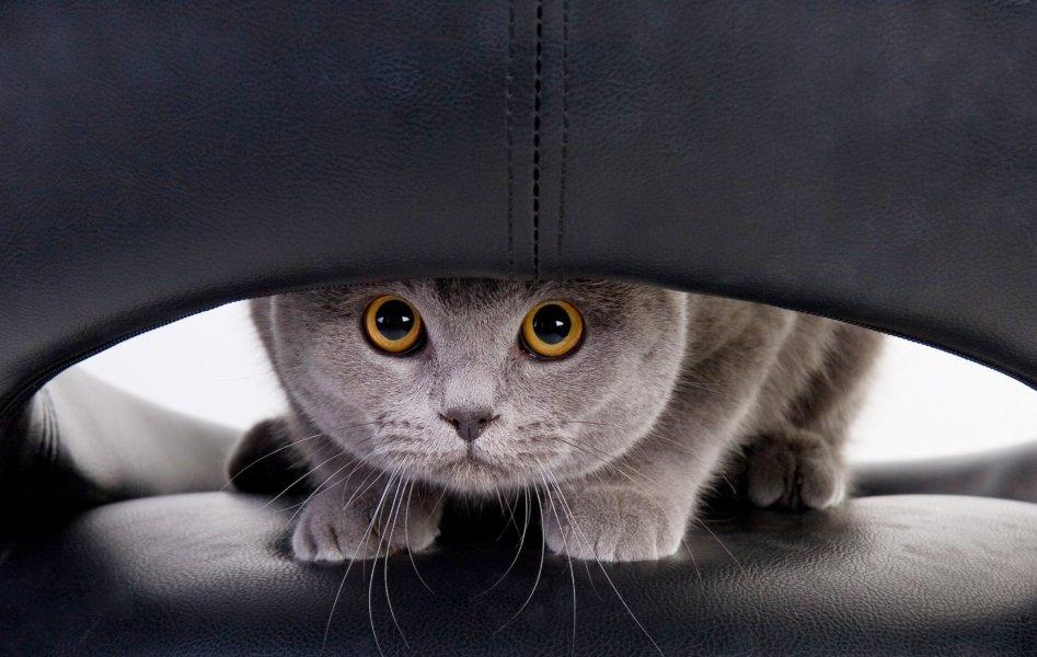 علائم استرس گربه