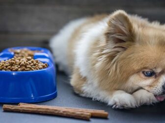 علت غذا نخوردن و بی اشتهایی سگ؛ چرا سگم غذا نمیخوره؟