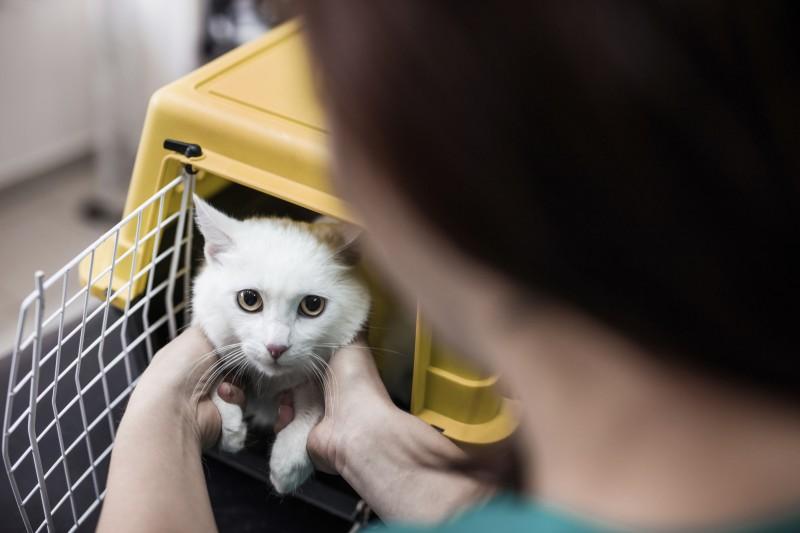 کاهش اضطراب گربه