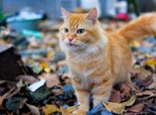 همه چیز در مورد گربههای DSH، فرشتههای باهوشِ خیابانی!