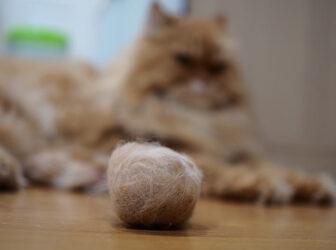 راههای جلوگیری از استفراغ گلوله مویی یا هربال گربه