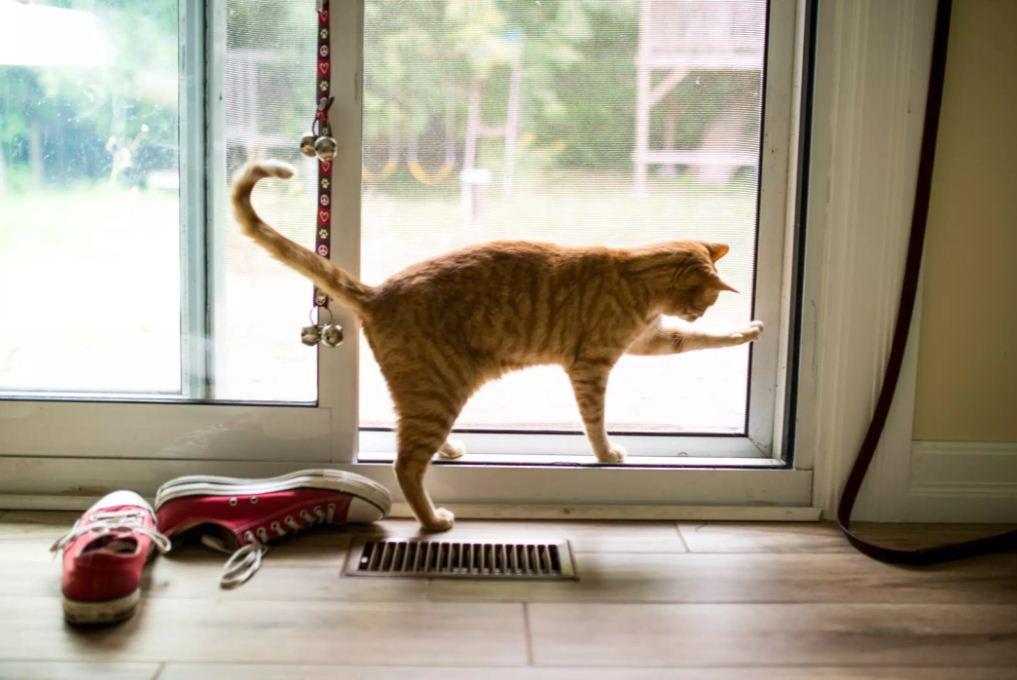 فرار کردن از خانه؛ یکی از علائم پریود گربه