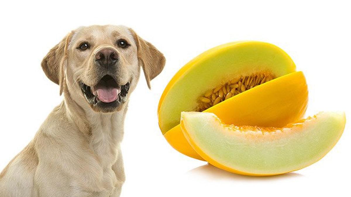 خوردن طالبی برای سگ