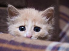 دلایل اضطراب گربه؛ روشهای پیشگیری و درمان استرس گربه