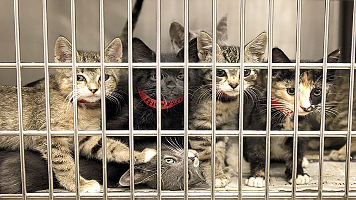 چند گربه در پناهگاه