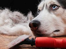 ریزش موی سگ؛ درمان، جلوگیری و شناخت علت های ریزش موی سگ