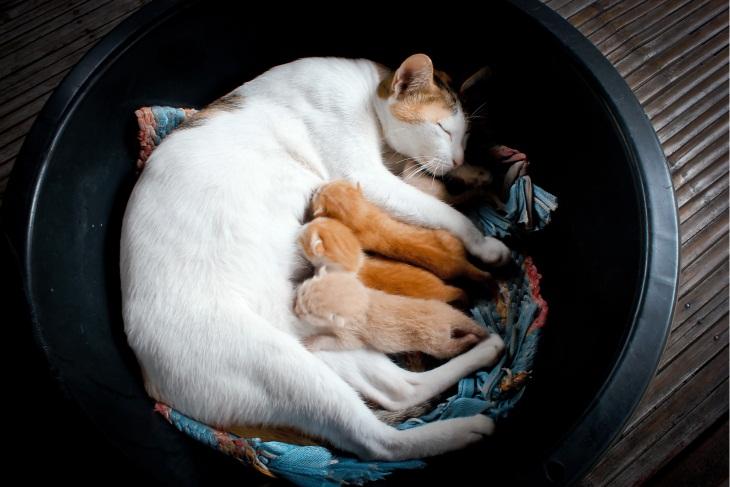 عکس زایمان گربه