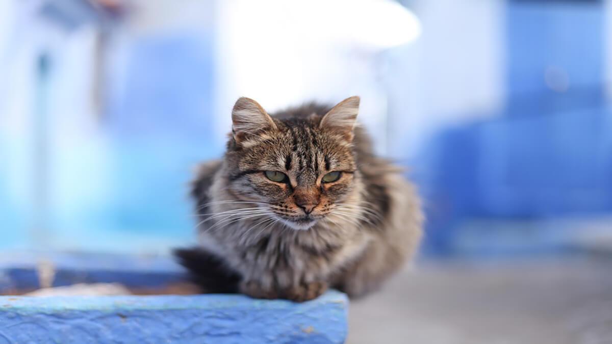 گربه خیابانی ناقل ویروس هاری