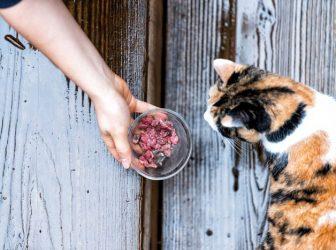 یک بار برای همیشه: آیا دل و سنگدان و جگر برای گربه خوب است یا نه؟