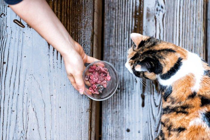 جگر پخته برای گربه