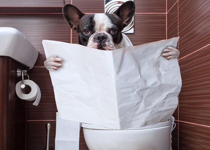 دلایل اسهال سگ