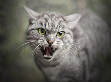 هاری در گربه ها؛ آیا گربههای خانگی هم ممکنه هاری بگیرن؟
