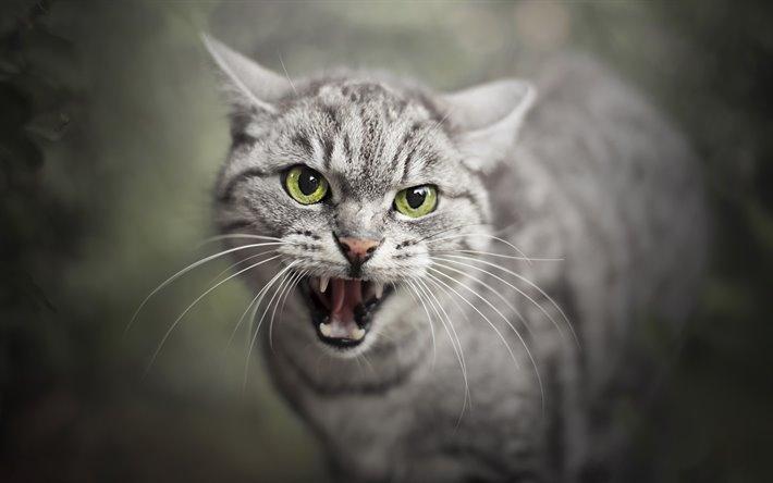 هاری گربه