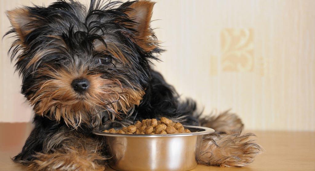 واکنش های غذایی منفی سگ