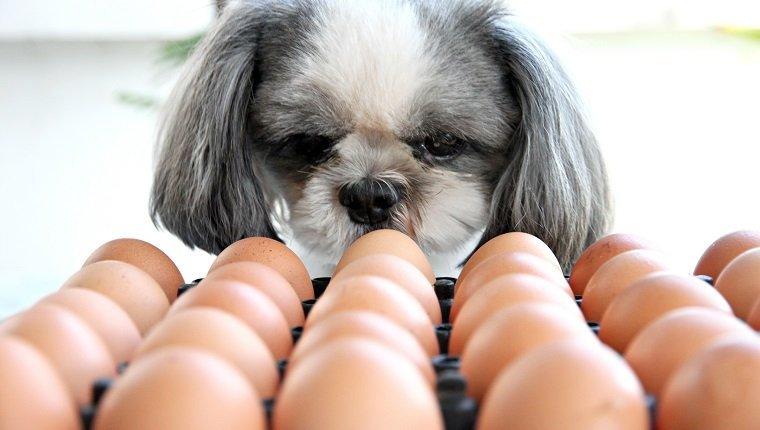 تخم مرغ برای سگ