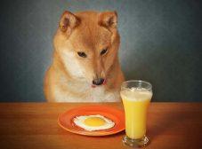 تخم مرغ برای سگ؛ آیا سگها میتونن تخم مرغ بخورن؟