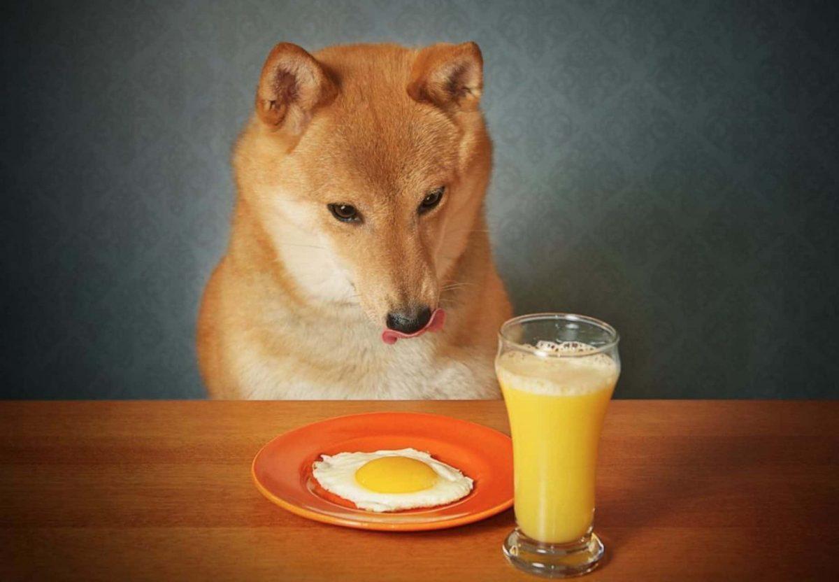 نیمرو برای سگ