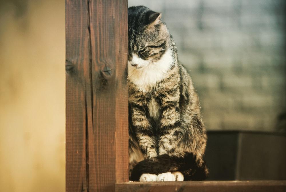 منزوی شدن گربه
